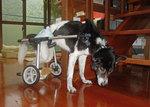 犬の車椅子.jpg